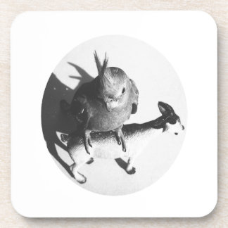 Cockatiel on goat bw circle drink coaster