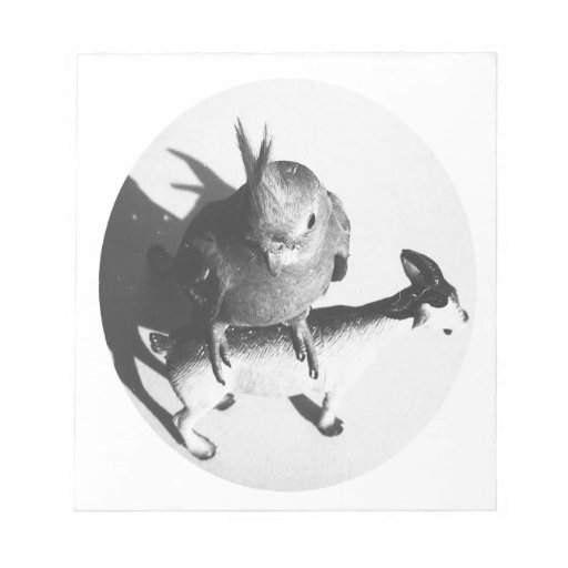 Cockatiel on goat bw circle memo notepads