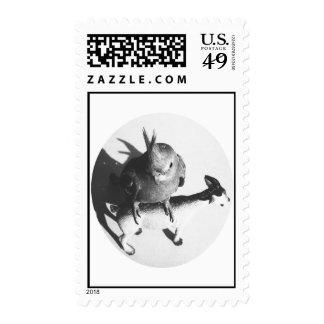 Cockatiel on goat bw circle postage