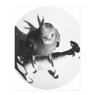 Cockatiel on goat bw circle postcard