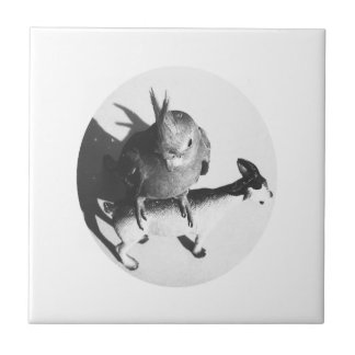 Cockatiel on goat bw circle small square tile