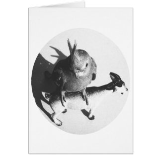 Cockatiel on goat bw circle stationery note card