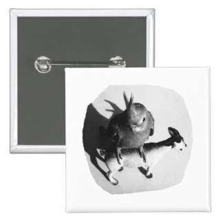 Cockatiel on rubber goat black and white picture pin