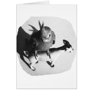 Cockatiel on rubber goat black and white picture card