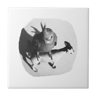 Cockatiel on rubber goat black and white picture ceramic tile