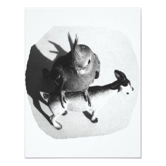 Cockatiel on rubber goat black and white picture personalized invites