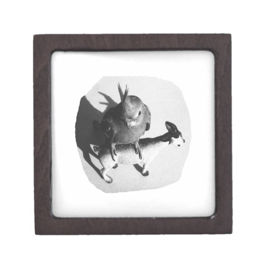 Cockatiel on rubber goat black and white picture keepsake box