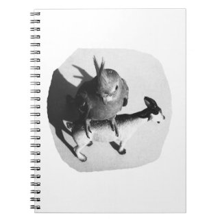 Cockatiel on rubber goat black and white picture notebook