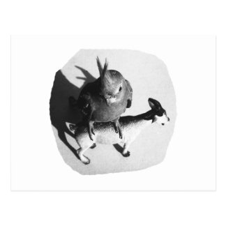 Cockatiel on rubber goat black and white picture postcard