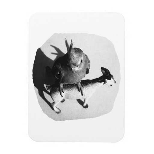 Cockatiel on rubber goat black and white picture rectangular magnets