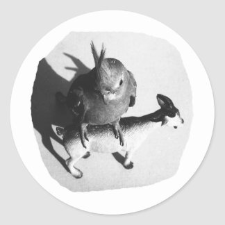 Cockatiel on rubber goat black and white picture round stickers