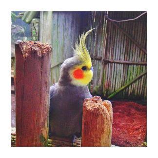 Cockatiel Parakeet Canvas Print