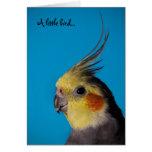 Cockatiel, pequeño pájaro de A… Felicitaciones