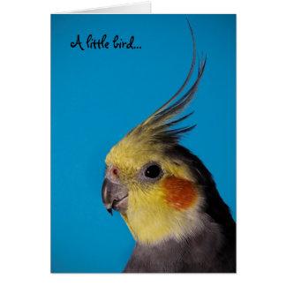 Cockatiel, pequeño pájaro de A… Tarjeta De Felicitación