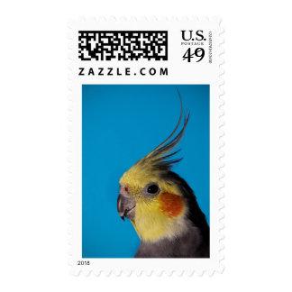 Cockatiel Postage Stamp