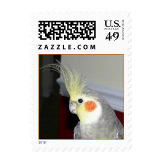Cockatiel (Small) Postage
