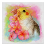 Cockatiel With Frangipani Realistic Painting Poster