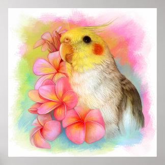 Cockatiel with frangipani poster