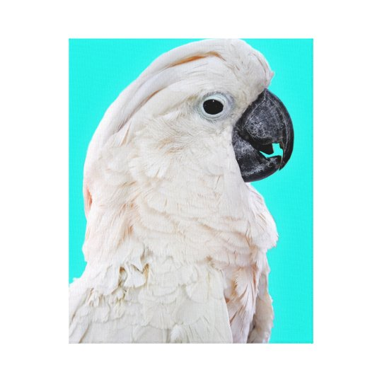Cockatoo Bird Portrait Canvas Print