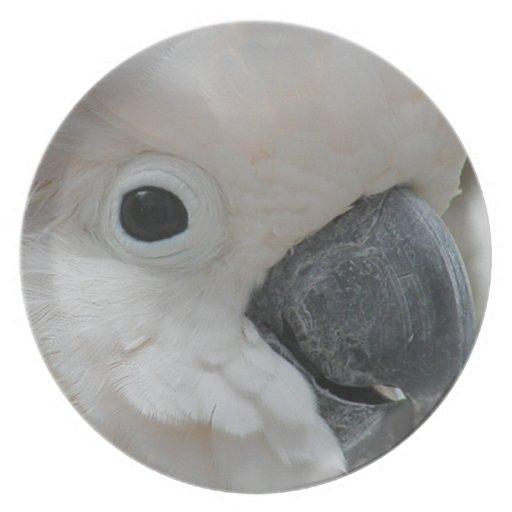 Cockatoo blanco bonito plato para fiesta