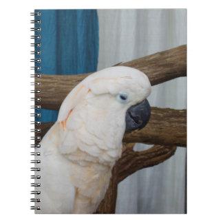 Cockatoo cansado libreta espiral