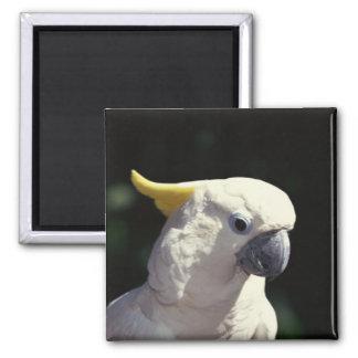 Cockatoo Close-Up Magnet