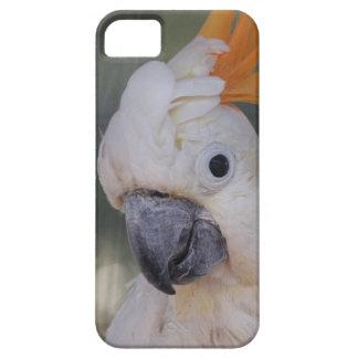 Cockatoo con cresta amarillo (caso del iPhone 5) Funda Para iPhone SE/5/5s