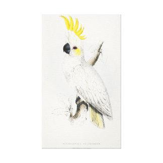 Cockatoo con cresta amarillo lienzo envuelto para galerías