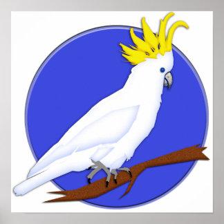 Cockatoo con cresta amarillo póster