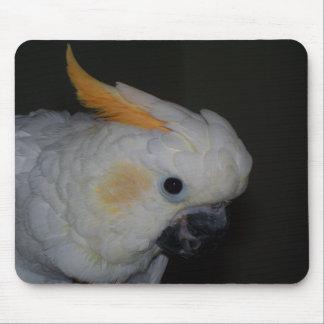 Cockatoo con cresta cítrico alfombrillas de ratones