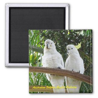 Cockatoo con cresta del azufre australiano imán cuadrado