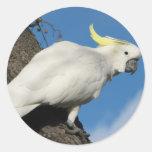 Cockatoo con cresta del azufre pegatina redonda