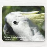 Cockatoo con cresta del azufre alfombrilla de raton