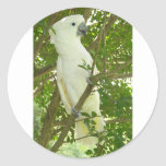 Cockatoo de Sydney Etiqueta Redonda