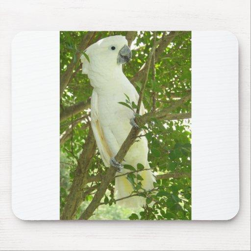 Cockatoo de Sydney Tapetes De Raton