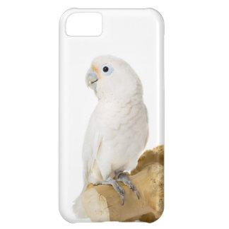 Cockatoo, foto hermosa del pájaro blanco del loro,