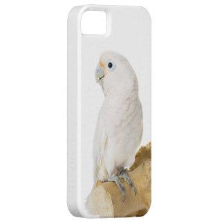 Cockatoo, foto hermosa del pájaro blanco del loro, iPhone 5 protector