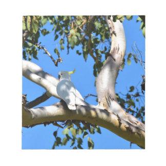COCKATOO IN TREE IN RURAL QUEENSLAND AUSTRALIA NOTEPAD