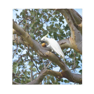 COCKATOO IN TREE RURAL QUEENSLAND AUSTRALIA NOTEPAD