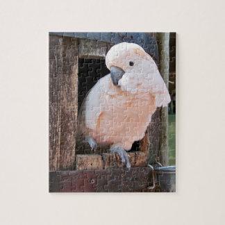 Cockatoo moluqueño puzzle
