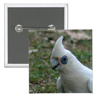 Cockatoo observado azul pin cuadrado