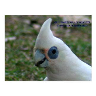 Cockatoo observado azul tarjeta postal