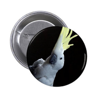 Cockatoo Parrot Button