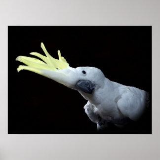 Cockatoo Parrot Poster