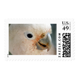 Cockatoo Postage Stamp