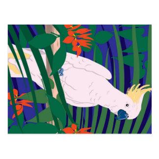 Cockatoo Post Card