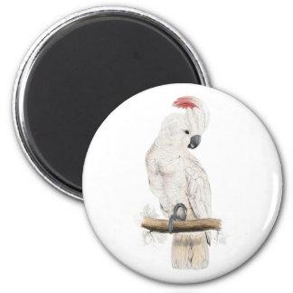 Cockatoo Salmón-Con cresta de Edward Lear Imán Redondo 5 Cm