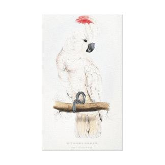 Cockatoo Salmón-con cresta Impresión En Tela