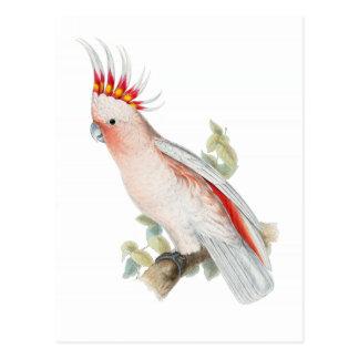 Cockatoo Vintage Post Cards