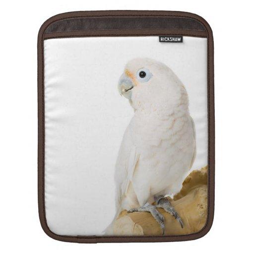 Cockatoo white parrot bird beautiful photo, gift iPad sleeves